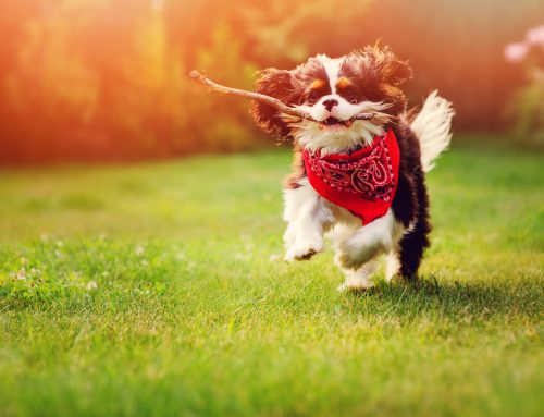 The Heat is On: Top 5 Tips to Keep Your Pets Safe in the Summer Sun