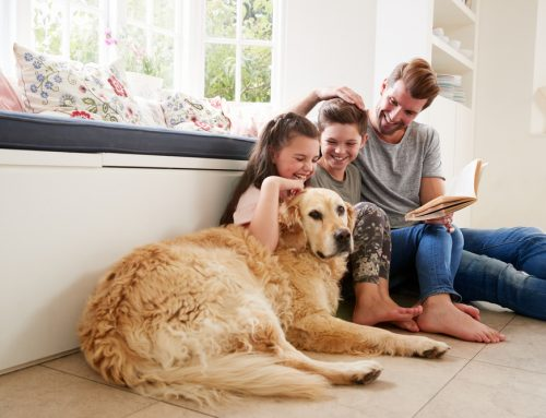Caring for Aging Pets: A Letter to Pet Parents