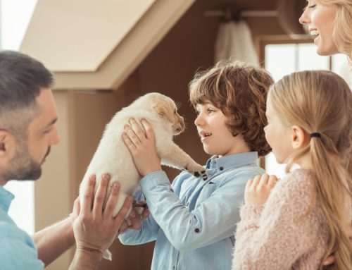 8 Ways to Welcome Your New Puppy Home