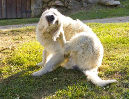 Harriet's Hay Fever: How to Help Your Pet Handle Allergies