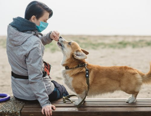 FAQs About COVID-19 and Pets