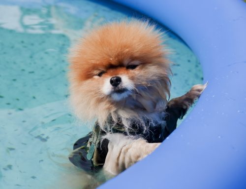 How to Help Your Pet Handle the Dog Days of Summer