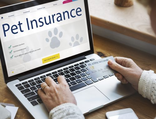 Does My Pet Really Need Health Insurance?