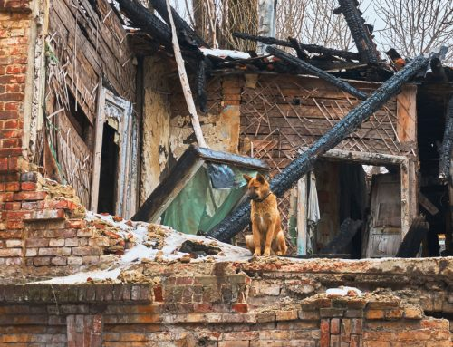 5 Essential Disaster Preparations for Pets