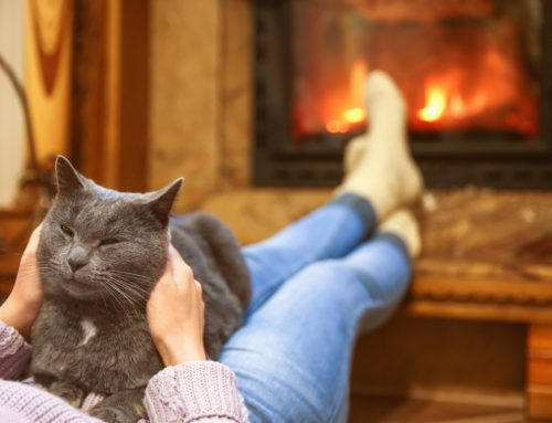 4 Tips to Ensure Your Pet is Safe This Winter