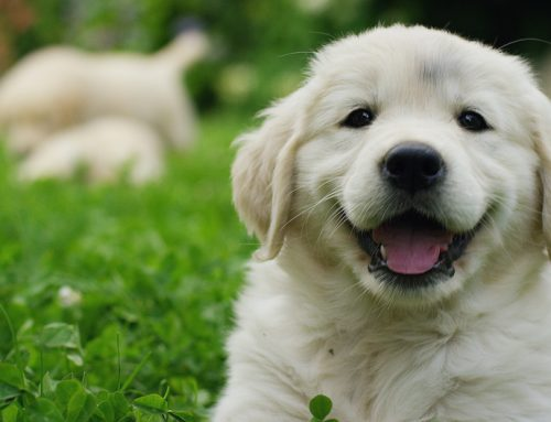 A Lifetime of Wellness: Setting Your Puppy Up for Success