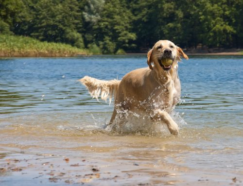 There's Something in the Water: Preventing Leptospirosis Infection