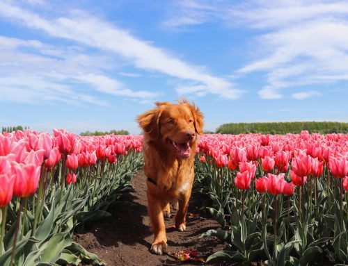 Pet Allergies Unraveled: 5 Facts You Didn't Know About Allergies In Your Pet