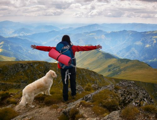 Trail Newbie? 5 Steps to a Safe Hike With Your Dog